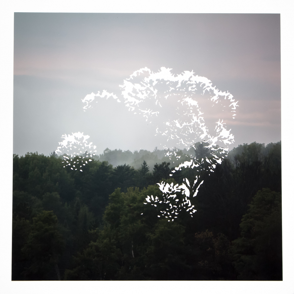 Lot #3<br/>Floating No.2 (Treetops)  ~  Fiona Freemark