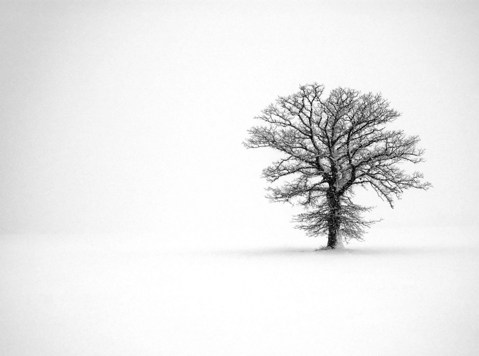 Lot #9<br/>Tree in White Field  ~  Alex Lukey