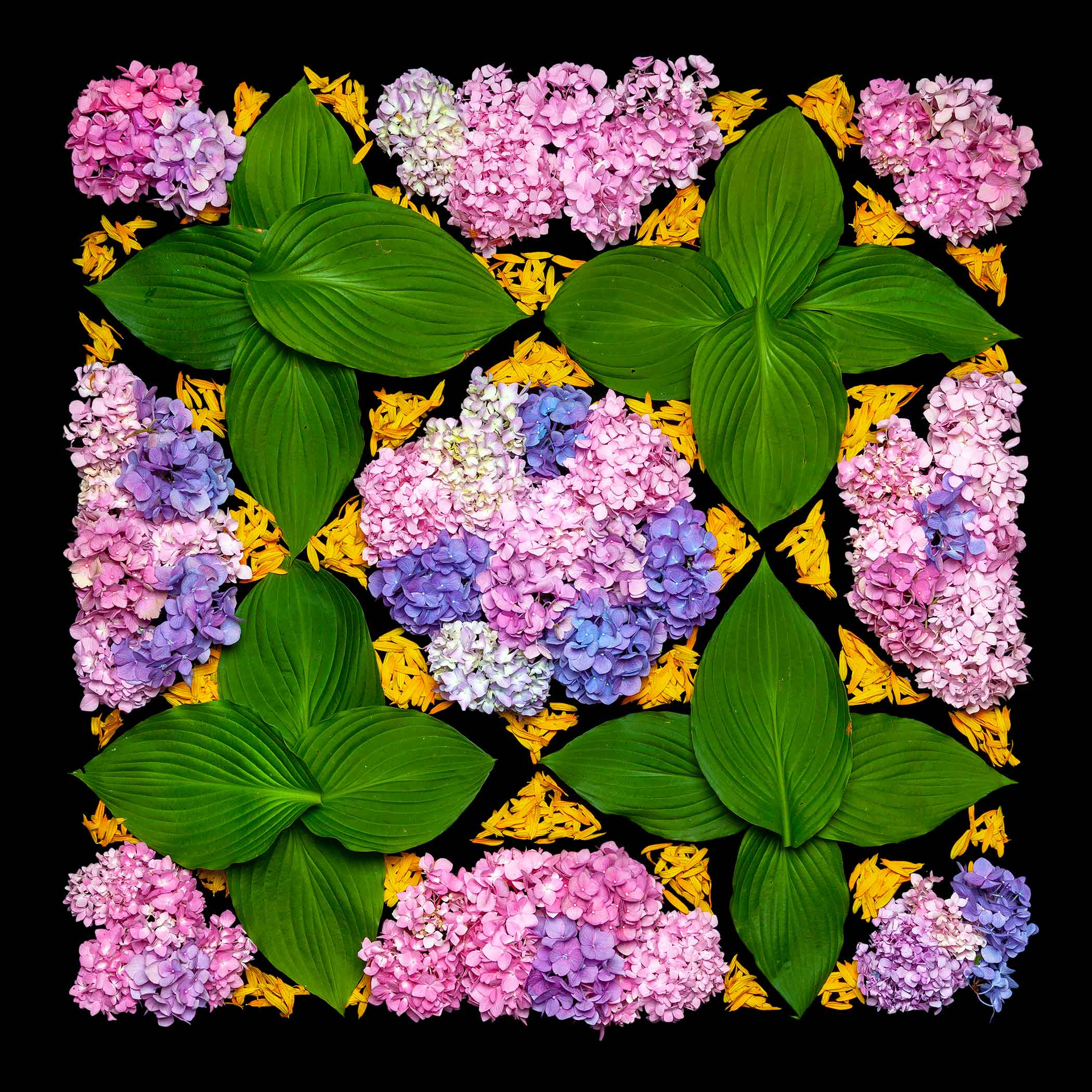 "Lot#12<br />""Hydrangea, Hosta, Black Eyed Susan"" from the series ""Flower Carpets/Tapetes Floridos"" ~ Danny Custodio"